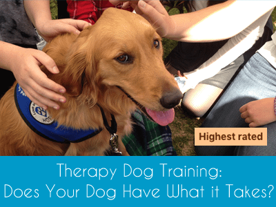 Therapy Dog Training Highest Rated