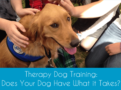 Online Course Therapy Dog Training Does Your Dog Have What it Takes